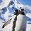 Stok fotoğraf: Two penguins dreaming
