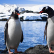 Two penguins resting — Stock Photo