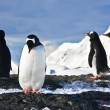 Penguins  on a rock in Antarctica — ストック写真