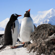 Penguins on rock — Stock Photo #4339817
