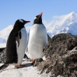 Penguins on rock — Stockfoto