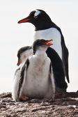 Trzy pingwinów na Antarktydzie — Zdjęcie stockowe