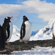 Penguins on rock in Antarctica — Stock Photo #4435354