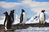 Penguins on a rock in Antarctica — Fotografia Stock