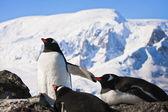 岩の上のペンギン — ストック写真