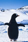 Pingwin na skałach — Zdjęcie stockowe