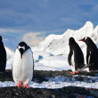 Penguins  on a rock in Antarctica — Stock Photo