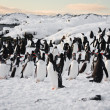 A large group of penguins — Zdjęcie stockowe