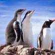 Foto de Stock  : Penguins in Antarctica