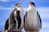 Two penguins in Antarctica — Stock Photo