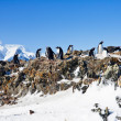 Penguins on a rock — Stock Photo