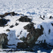 Penguins on a rock — Stock Photo #4591226