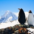 Stock Photo: Two penguins dreaming
