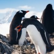 Penguins on a rock — Stock Photo #4591231