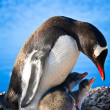 Penguin Family — Stock Photo #4591241