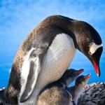 ペンギンの家族 — ストック写真 #4591241