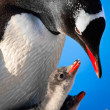 Penguin Family — Stock Photo #4591242