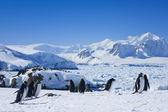Grande grupo de pinguins — Foto Stock