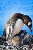Penguin Family — Stock Photo