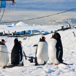 Penguins in Antarctica — Stock Photo #4714184