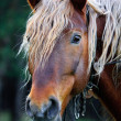 Stock Photo: Beautiful horse