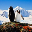 Two penguins — Stock Photo #4746737