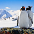 Two penguins — Stock Photo #4746740