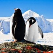 Two penguins — Stock Photo #4772365