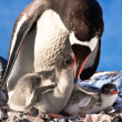 Penguin Family — Stock Photo