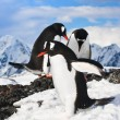 Penguins in Antarctica — Stockfoto #4790924