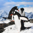 Penguins in Antarctica — Stock Photo #4790924
