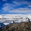 Penguins in Antarctica — Stock fotografie #4790947