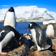 Penguins in Antarctica — Foto de stock #4790962