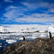 Penguins in Antarctica — Stockfoto #4798915