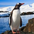 Foto Stock: Penguin in Antarctica