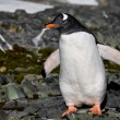 Penguin in Antarctica — Stock Photo #4844967