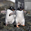 pingouins dans l'Antarctique — Photo #4844968