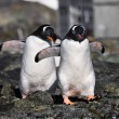 Penguins in Antarctica — Foto de stock #4844968