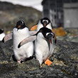 Penguins in Antarctica — Foto de stock #4844970