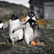 Penguins in Antarctica — Stockfoto #4844970