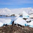 Penguins in Antarctica — Foto Stock