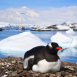 Penguins in Antarctica — Stock Photo #4872678
