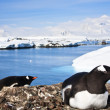 Penguins in Antarctica — Stock Photo #4872679