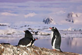 Penguins standing on a mountain — Stock Photo