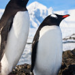 Penguins in Antarctica — Foto de stock #4919950