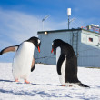 Penguins in Antarctica — Foto de stock #4919951