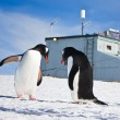 Penguins in Antarctica — Stockfoto #4919951