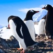 Penguins in Antarctica — Foto de stock #4919965