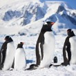Penguins in Antarctica — Stockfoto