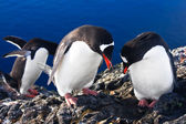 Group of penguins — Stock Photo